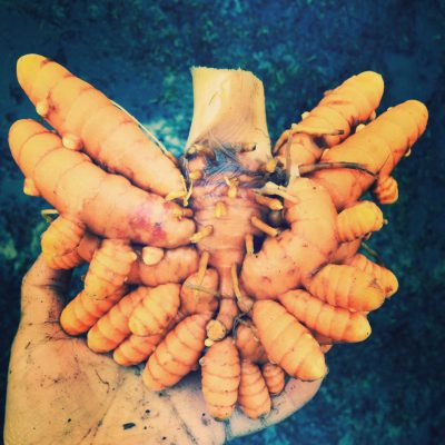 Terrific Turmeric!