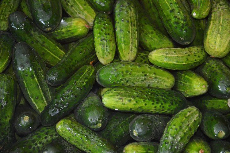 Cool as a Cucumber (Salad)
