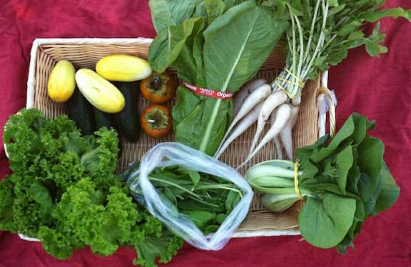 CSA Share for week of October 12th, 2015