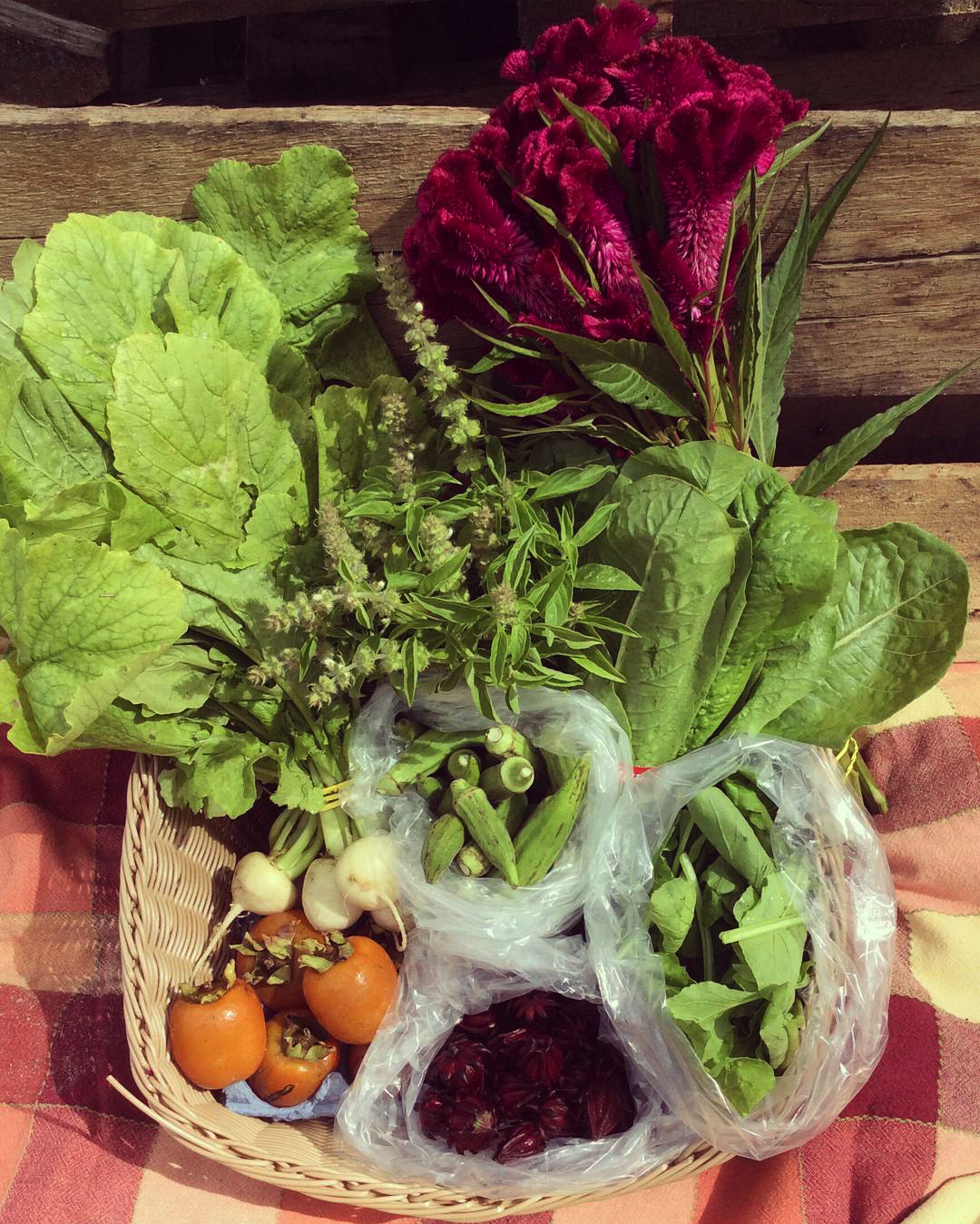 Romaine, Lemon-Lime Basil, Persimmons, Tokyo Turnips, Arugula, Roselle, Okra and a Celosia Bouquet!