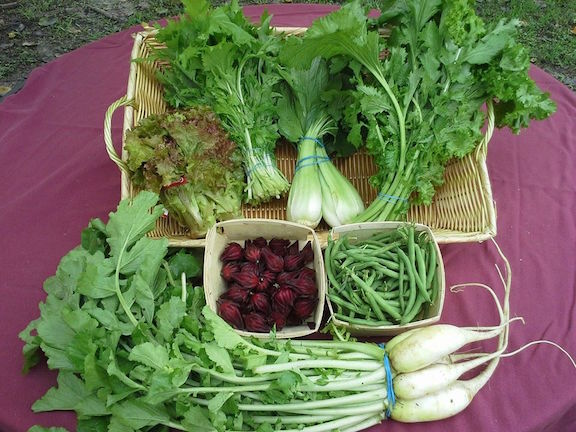 From left to right: Red Leaf Lettuce, Mizuna, Bok Choy, Mustard Greens, Roselle, Green Beans and Daikon Radish!