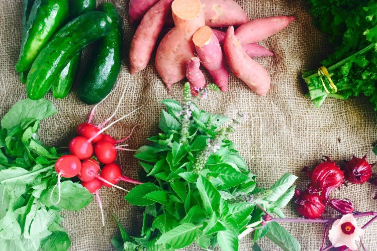 First Fall Harvest CSA Share