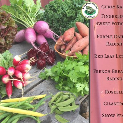 Weekly CSA Share December 5-9