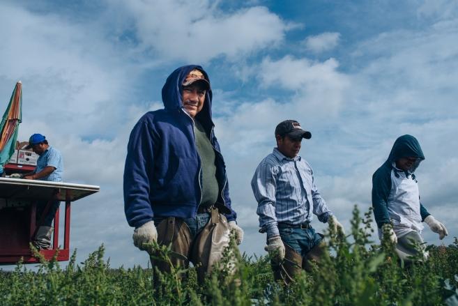 Northeast Florida Farmworkers