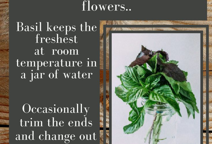 How To: Store Basil