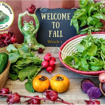 Welcome To Fall! First CSA Distribution October 17th-20th