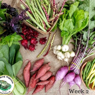 Weekly CSA Share- October 24-27