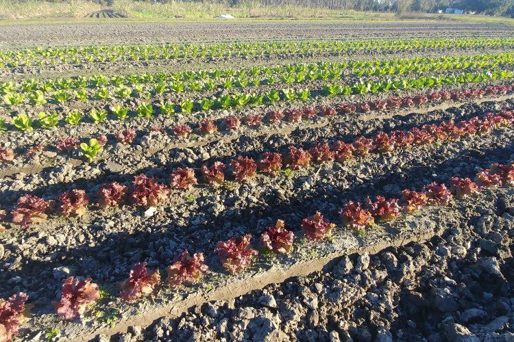 Farmer John's Field Report 2.25.19
