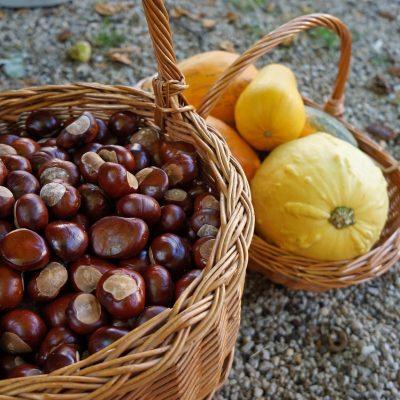 Chestnut Season!