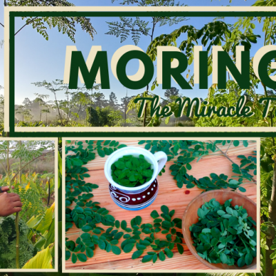 Moringa -The Miracle Tree