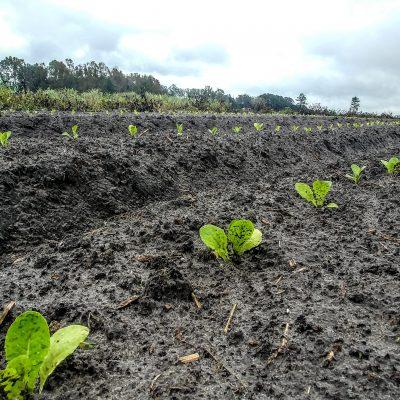 Farmer John's Field Report 12.3.18