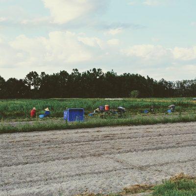 Florida Farm Tour by the Urban Harvest